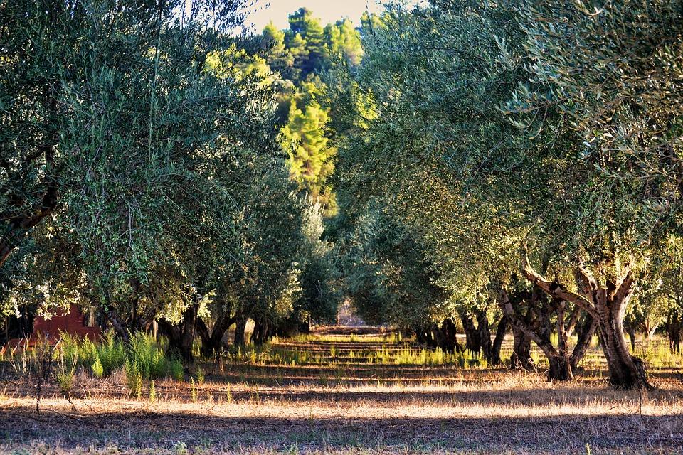 Investigadores andaluces desarrollan un sistema para predecir cómo serán las cosechas