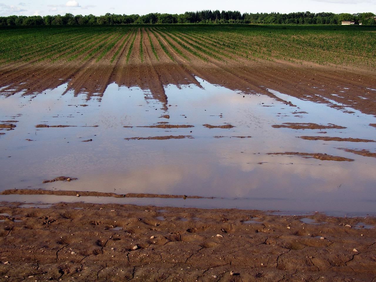 Los pequeños agricultores solicitan ayudas a la Junta de Andalucía por los daños del temporal de lluvias y granizo