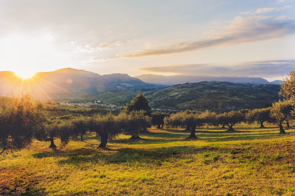 Una investigación andaluza lo constata: El aceite de oliva ofrece dos poderosas armas contra las bacterias