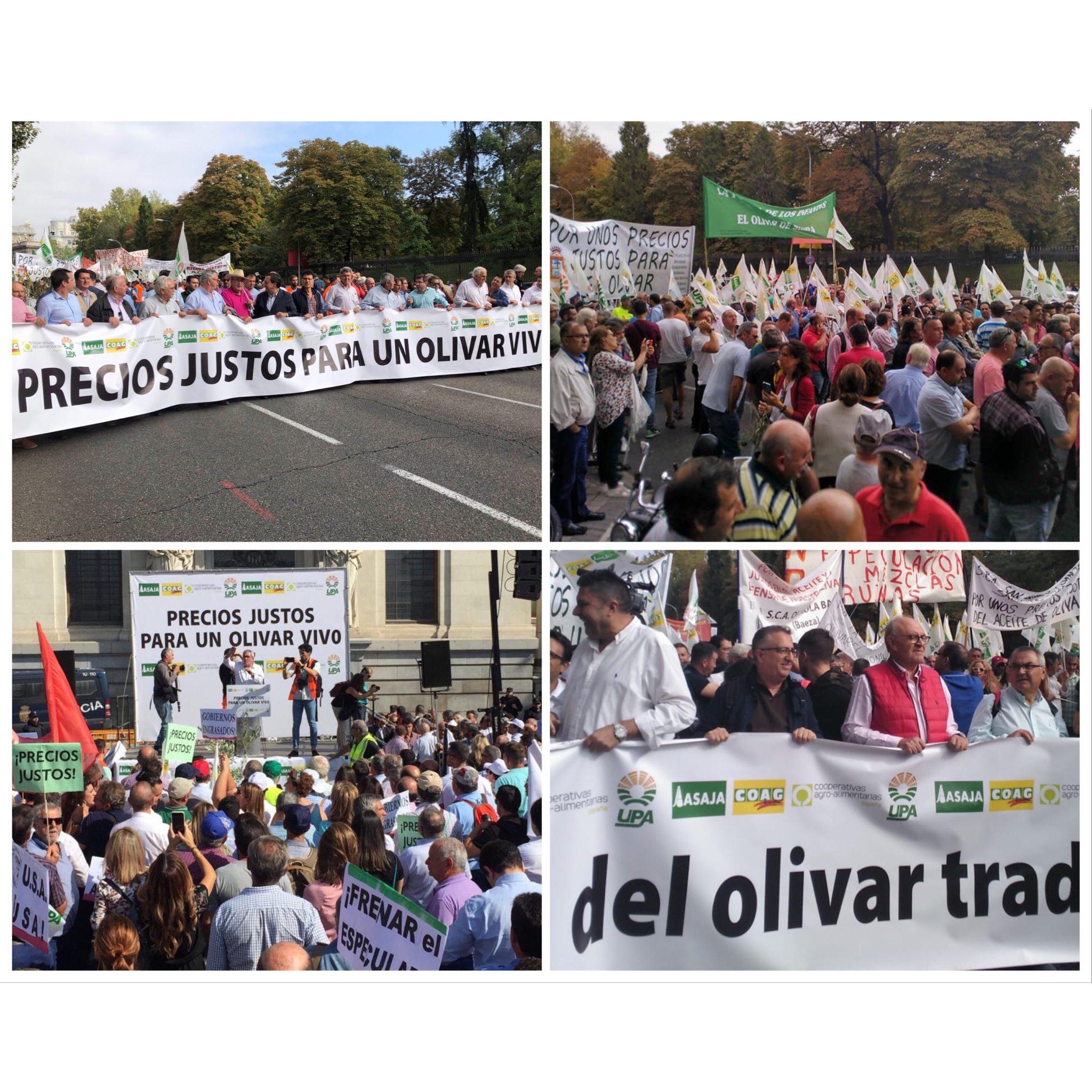Miles de olivareros de Andalucía exigen que se eleven los precios en origen para garantizar el futuro de 250.000 familias