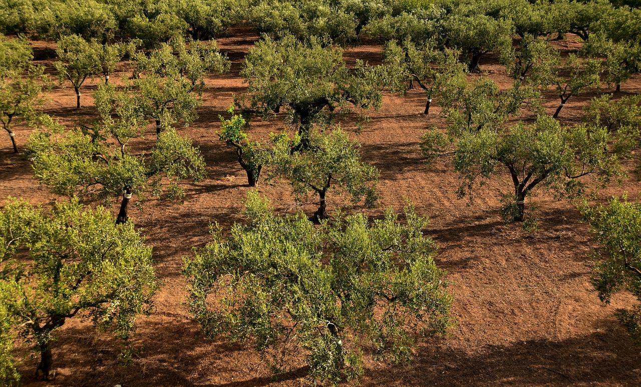 Las exportaciones de Aceite de oliva, vino, frutas y hortalizas de Andalucía en peligro