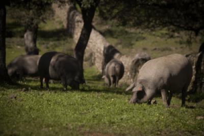 La escala Nutri-score «desprecia» el valor saludable del aceite de oliva y el ibérico de Andalucía