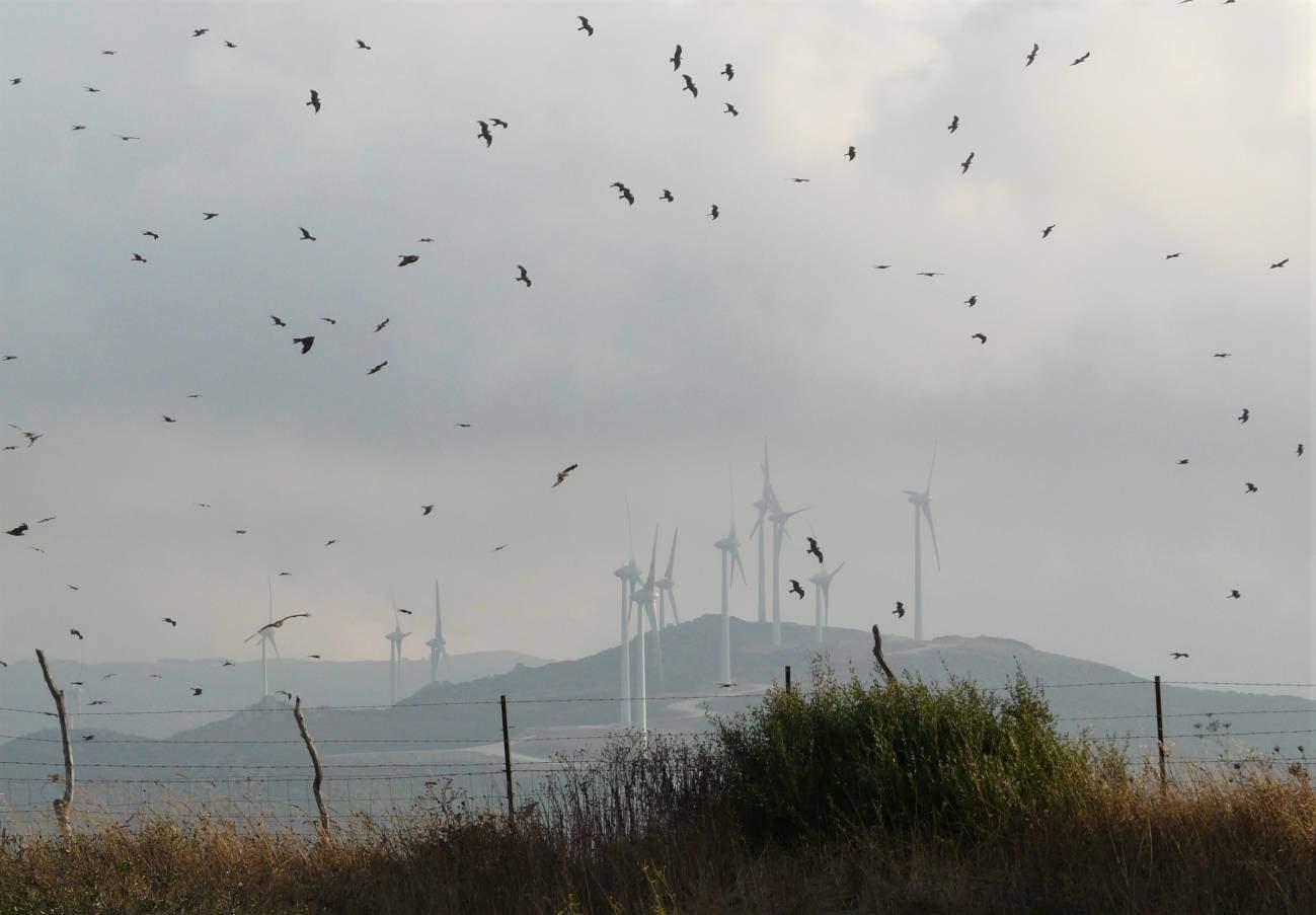 Las trayectorias de las aves en el estrecho de Gibraltar indican cómo situar los parques eólicos