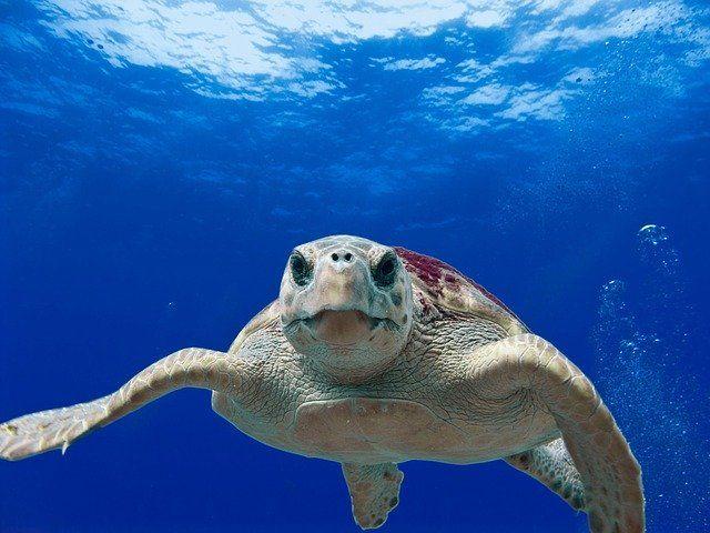 Liberadas en Andalucía una decena de tortugas marinas tras su recuperación