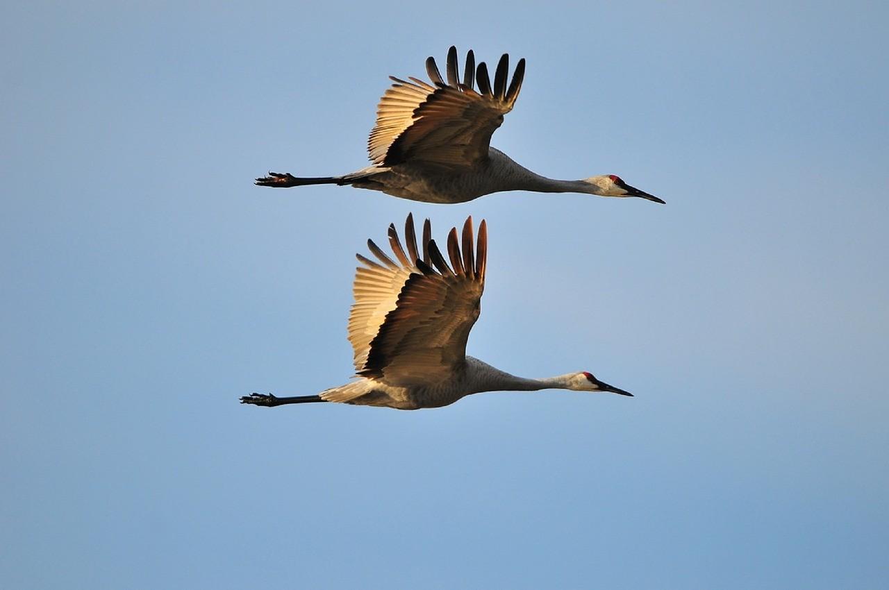 El cambio climático ya está alterando la migración de las aves