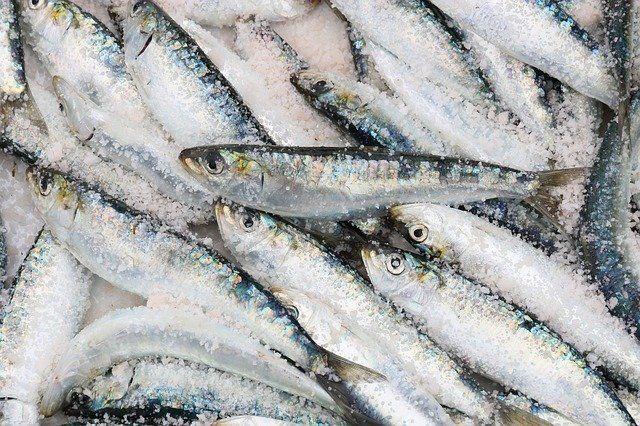 ¿Sabías que más del 50% de las sardinas y anchoas de nuestra costa mediterránea han ingerido microplásticos?