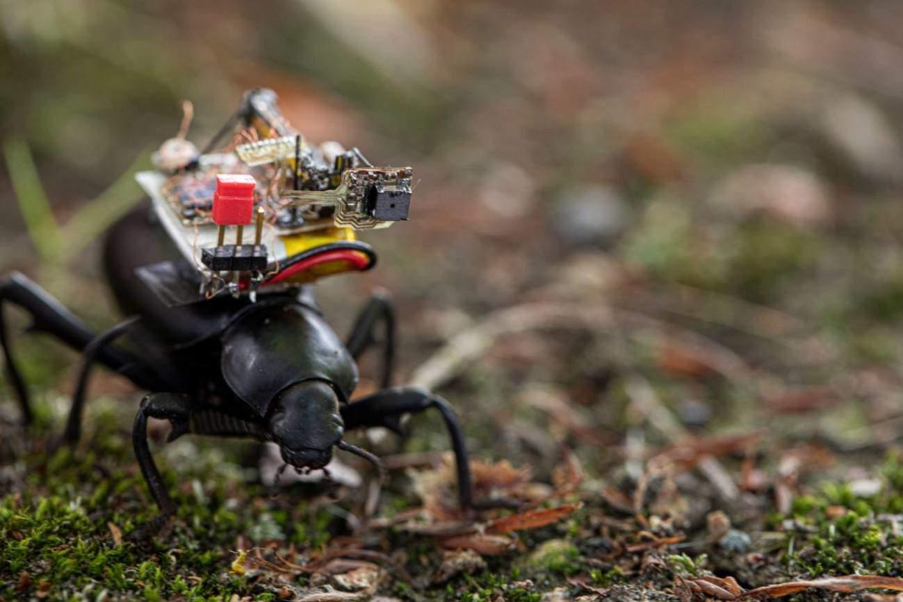 Una cámara diminuta nos permite observar como si fuéramos un insecto ¿te apetece verlo?