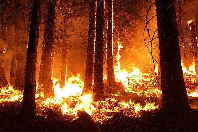 Entran en vigor nuevas prohibiciones en los espacios forestales andaluces: Te contamos qué no se puede hacer a partir de ahora