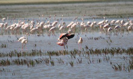 Andalucía tiene 233 humedales para aves acuáticas a los que ya han llegado 819.200 ejemplares y nosotros te los enseñamos