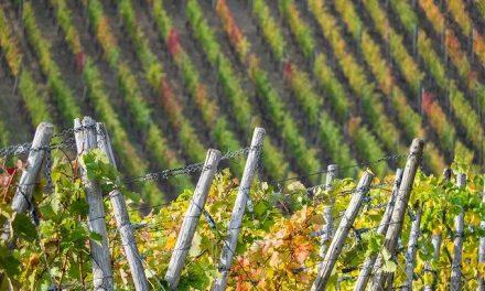 El Quinto Consejo Regulador de Vinos en Andalucía