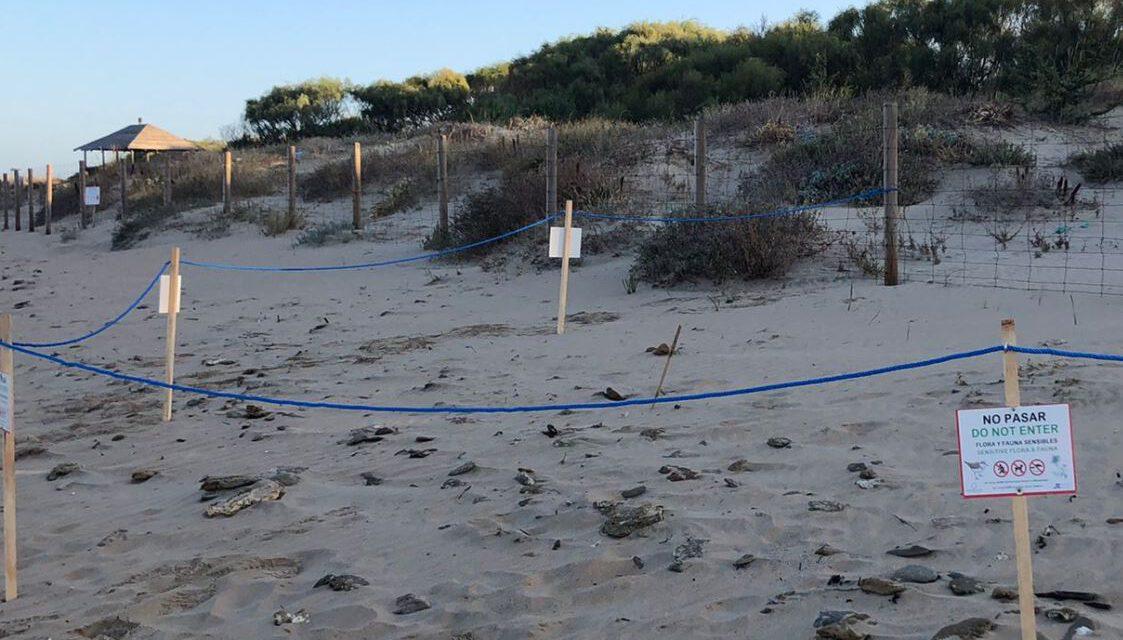 Noticias de Cádiz: Sistemas de balizamiento y señalización para la protección de las aves en las playas gaditanas