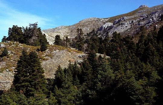 Andalucía ya cuenta con tres parques nacionales: adelante con el Proyecto de Ley de declaración del Parque Nacional de Sierra de las Nieves