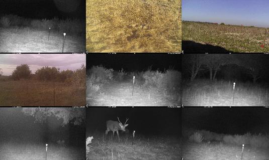 Fototrampeo: Inteligencia artificial para estudiar la fauna de Doñana y mejorar su conservación
