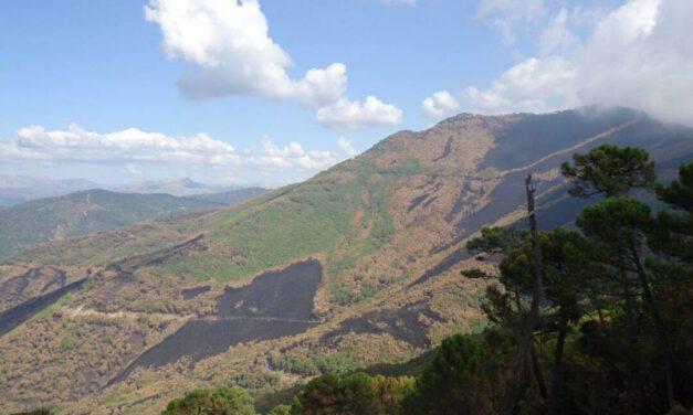 """Ecologistas en Andalucía: """"Sierra Bermeja necesita un Plan de Restauración forestal y ser protegido como parque nacional"""""""